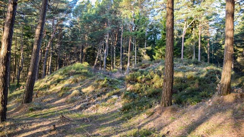 GRAVHAUG: I denne gravhaugen på Hoveodden skal det angivelig ha blitt funnet en ring, som nå flere år senere er levert inn til myndighetene for videre undersøkelser. I denne artikkelen kan du se foto av den aktuelle ringen. Foto: Esben Holm Eskelund