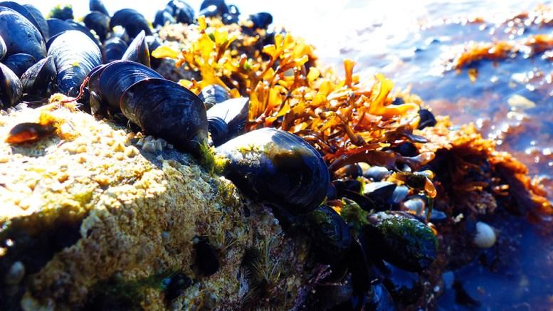 MARINT VERN: Med henblikk på fangst er vernet i norske marine nasjonalparker svært svakt, skriver nasjonalparkforvalter Jenny Marie Gulbrandsen i Raet nasjonalpark. Foto: Raet nasjonalpark / Øivind Berg