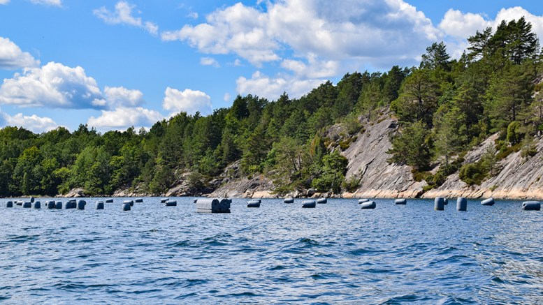 SKAL FJERNES: Fiskeridirektoratet har lyst ut anbud for opprydning av forlatte blåskjellanlegg i tre kommuner, som blant annet her i Flosterfjorden. Arkivfoto