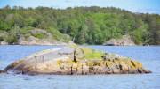 HEKKELOKALITETER: Statens Naturoppsyn har utarbeidet et kart som viser hvor sjøfugl hekker i Hovekilen. Her kan du se hvor du skal la makrellterner og fiskemåker få være i fred. Foto: Esben Holm Eskelund