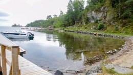 FANT RØDLISTET ART: Undersøkelser måtte til for å finne ut om arten virkelig var på plass i sjøen i Alvekilen, i et området regulert for flytebrygger og båtrampe. Foto: Esben Holm Eskelund