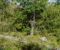 STIMERKING: Å få tydelig merking på stiene hvor folk kan gå på Øyna blir ikke lagt bort, selv om planarbeidet med adkomst til Gåsholmen foreslås ut av planstrategien i Arendal kommune flere år frem i tid. Arkivfoto