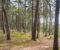 SIKRINGSUTGRAVING: Agder fylkeskommune vurderer å grave ut en gravrøys på Hoveodden, som det er bekymring for at skal bli glemt og dermed enda mer ødelagt. Foto: Esben Holm Eskelund
