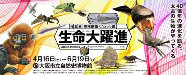 semei_daiyaku