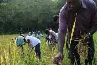 Governo de SP reconhece que roça tradicional quilombola mantém a floresta em pé