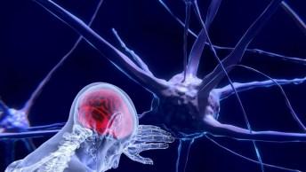 """Le neuroscienze? Un'eccellenza italiana""""   Rep"""