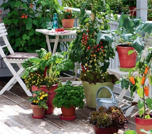 Gemüse-Balkon