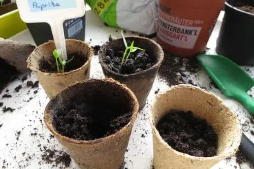 Blog Gemüse Balkon