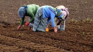 The Role Of Women In Rural Development, Food Production And Poverty Eradication