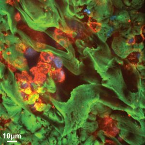 Mucus Layer Over Cells