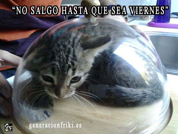 469) 16-06-14 no-salgo-hasta-que-sea-viernes-Humor