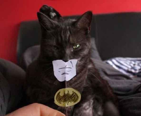 1-Gato-Batman-1