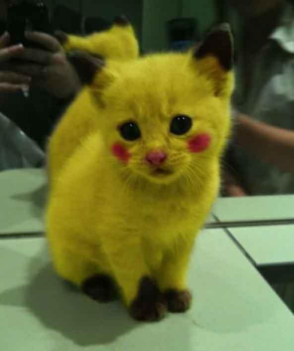 16-Gato-Pikachu-16