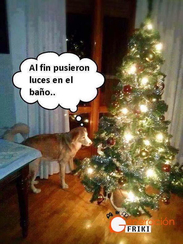 771) 04-12-14 luces-bano-perro-Humor