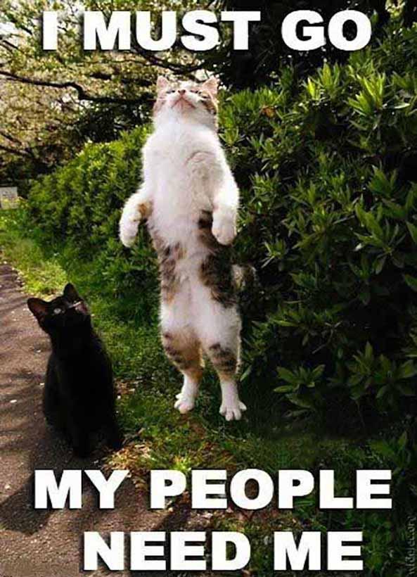 854) 18-02-15 gato-meme-i-must-go-Humor