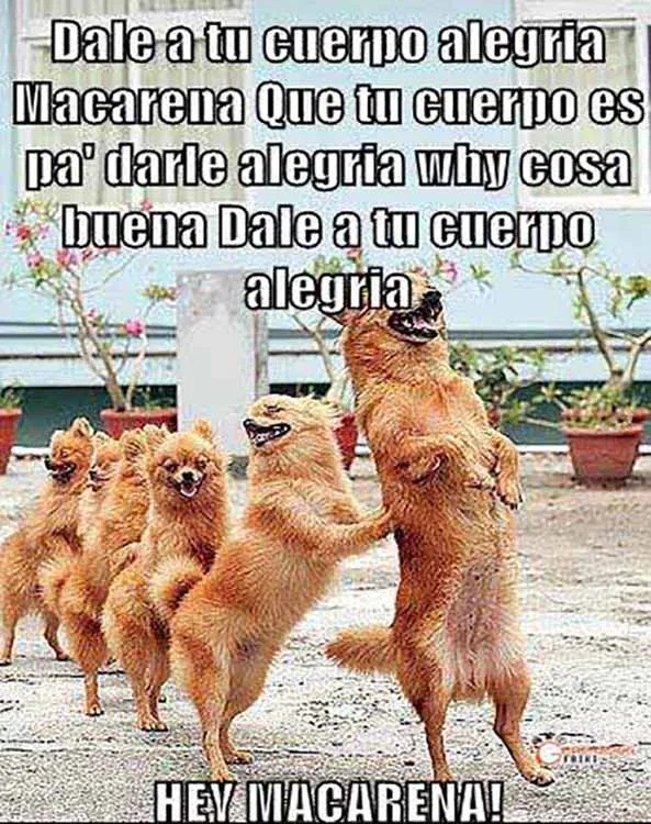 910) 27-03-15 perros-conga-2-Humor