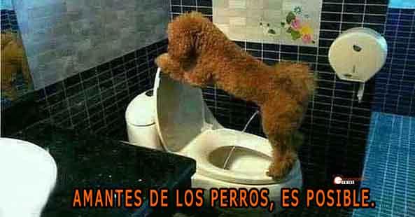 1155) 17-12-15 Perro-meando-Humor