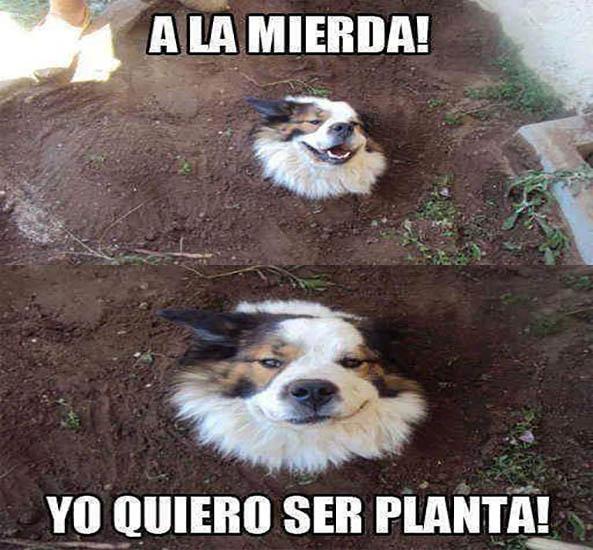 1257-07-04-16-perro-quiere-ser-planta-humor