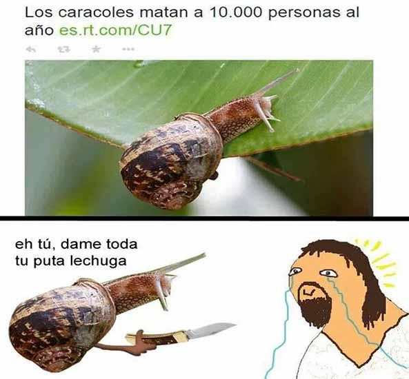 1397) 08-11-16 caracoles-matan-Humor
