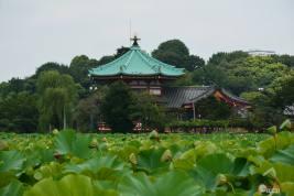 itinerario-japon-para-frikis-otakus-15-días-parte-1-generacion-friki-ueno-3