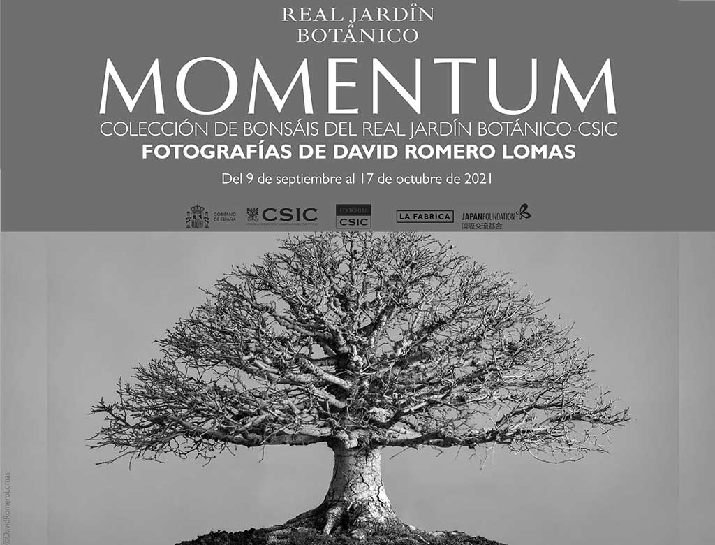 "Exposición ""Momentum"" - Colección de bonsáis (Madrid)"