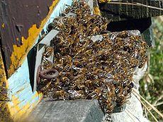 cire d abeille