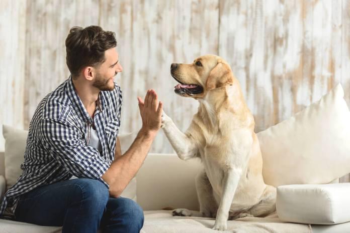Allena Il Tuo Cucciolo Nel Tempo Libero