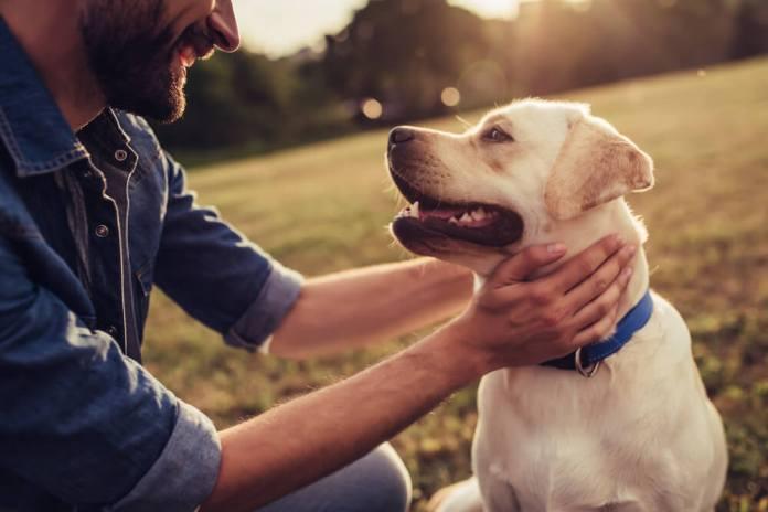 Hai Bisogno Di Aiuto Per La Cura Di Un Cane
