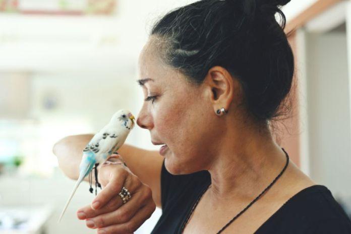 Comprare un uccello cose che devi sapere sulla cura