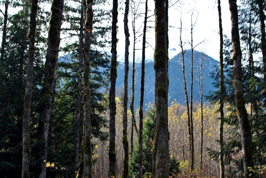 Generic-Van-Life-Camping-Spot-Squamish-Riverside-British-Columbia-Mountains