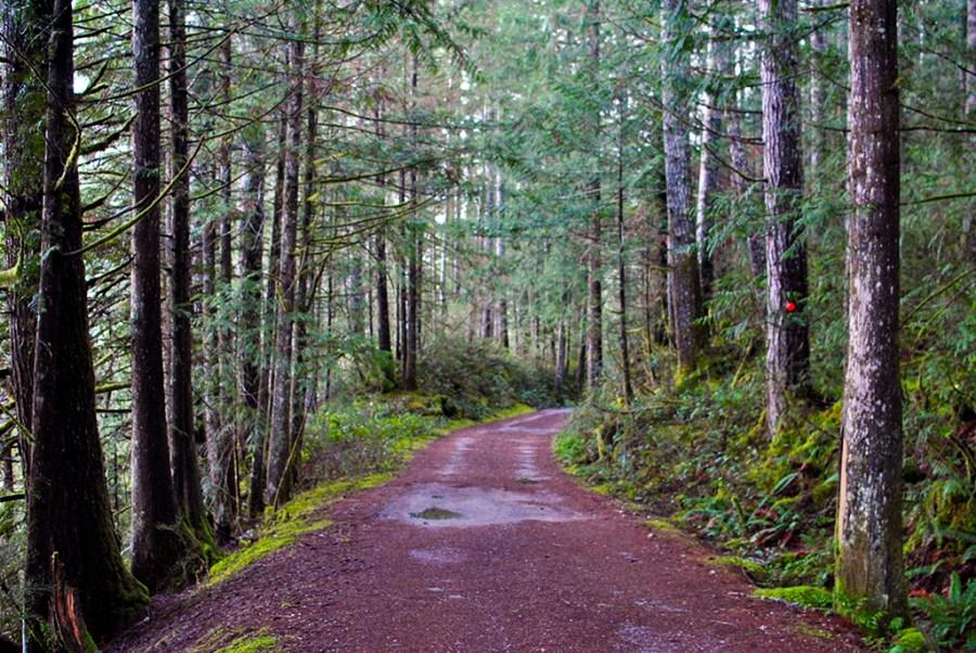 Generic-Van-Life-Camping-Spot-McCreight-Lake-British-Columbia-Road