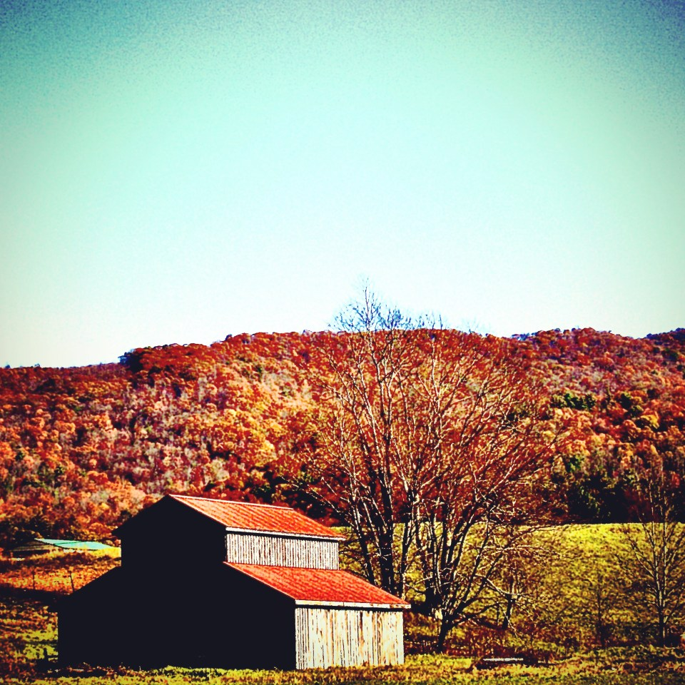 Shady Valley, TN. 2 November 19,