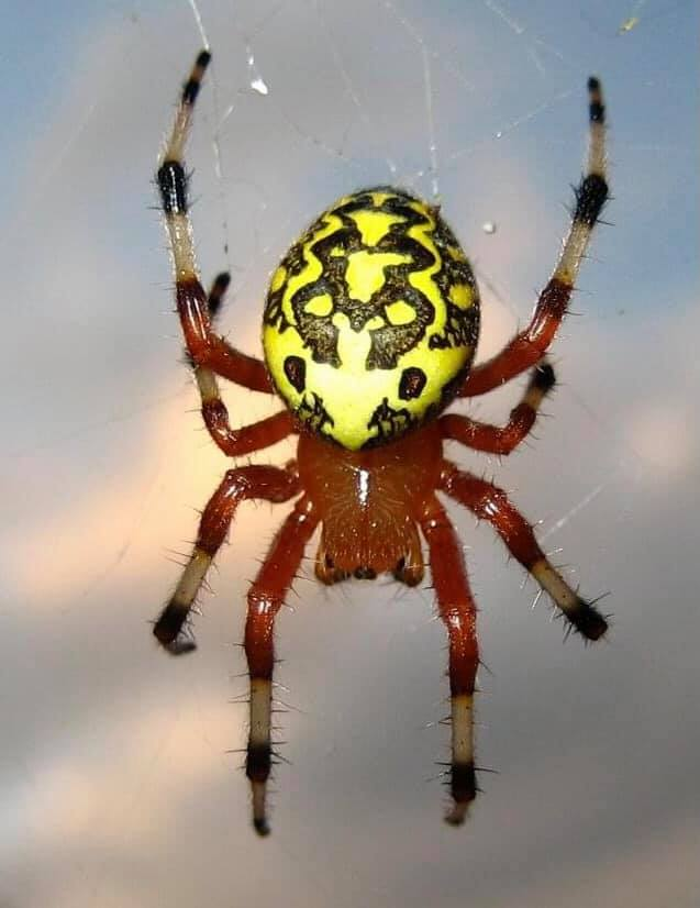 October Spider. 20 October 10. Copyright: AMM, LLC.