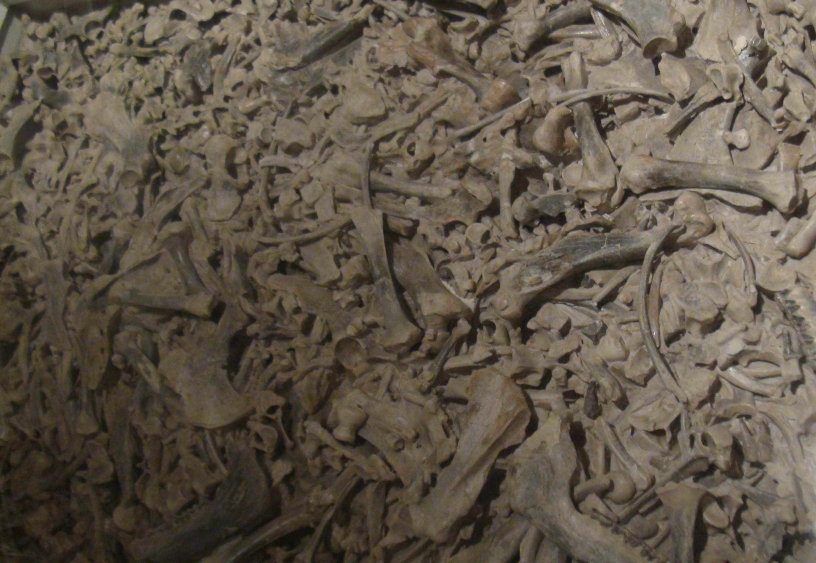 Image result for fossil bone yards