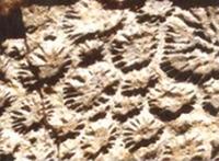 Fossilized Dinosaur Skin