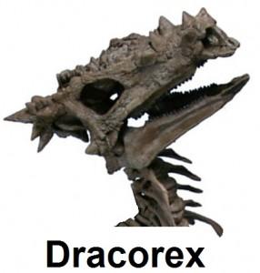 Dracorex Skeleton