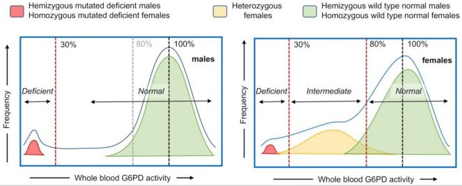 image showing the distribution of G6PD deficiency in males and females