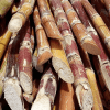 Brazil expected to release first variety of GMO sugarcane in 2017