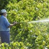 Indian crop scientists: 9 natural organic pesticides that can harm our health and ecosystem
