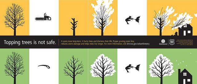Bomen snoeien, Toppen bomen