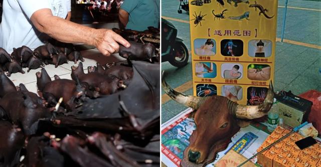 Ini Yang Dilakukan Kepada Gajah Akibat COVID-19 Melanda Thailand 2