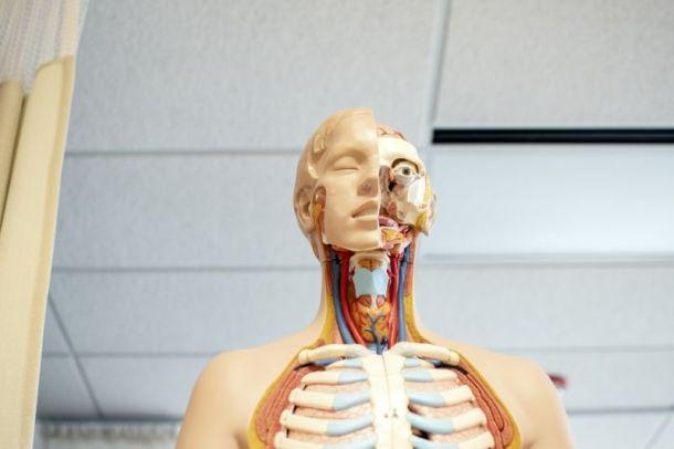 Problemi alla tiroide: come prevenirli | Genitorialmente