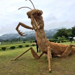 Vir: http://all-that-is-interesting.com/japanese-straw-sculptures
