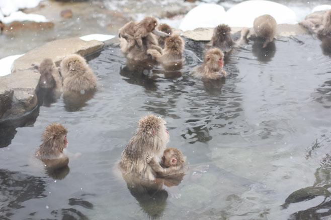 No Japão, até os macacos gostam de tomar banho... Eles procuram as fontes termais para se aquecerem e se limparem.