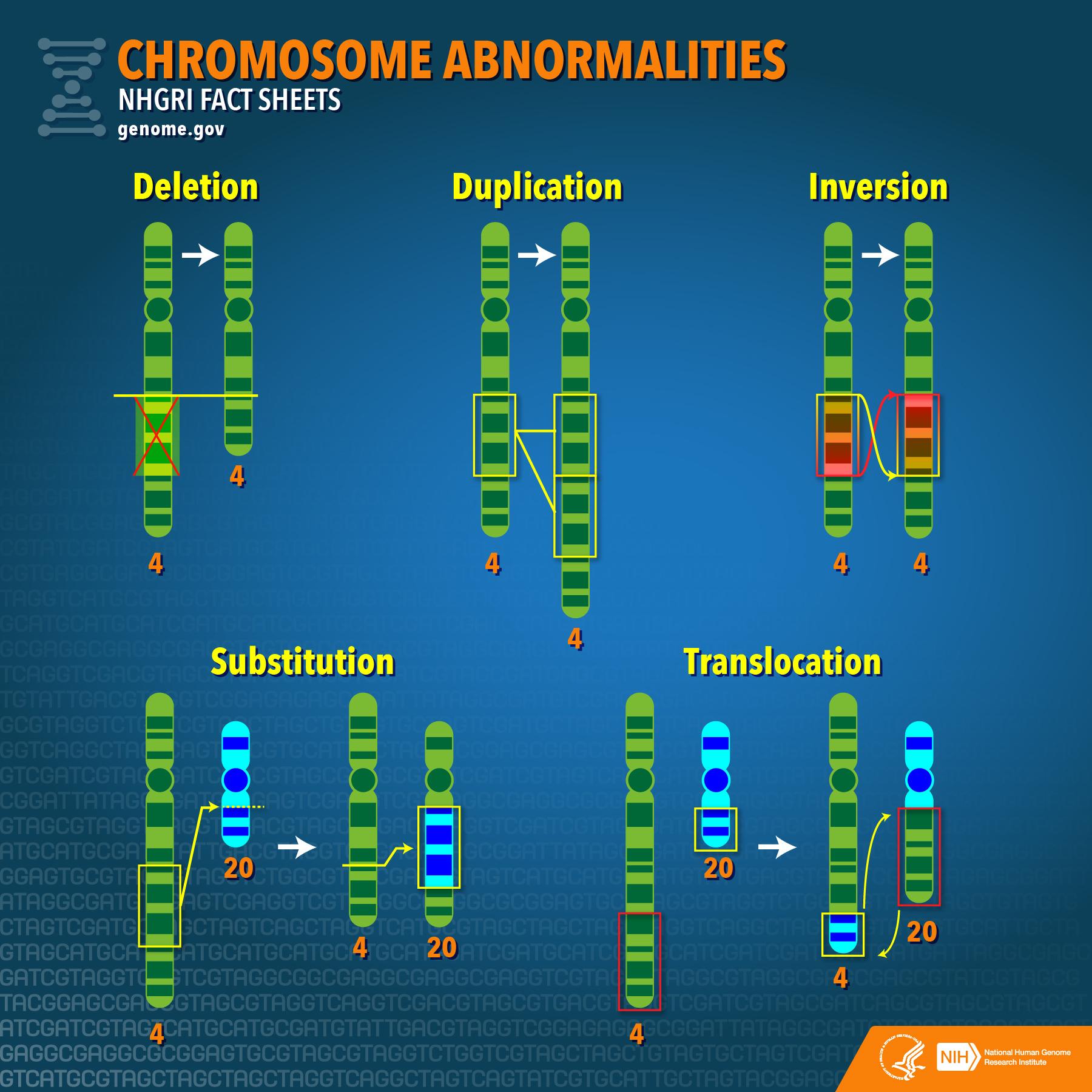 Chromosome Abnormalities Fact Sheet