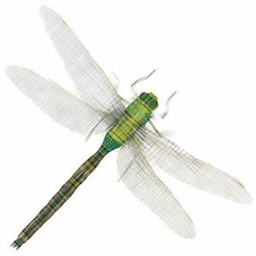 Příběh vážky – GK 55