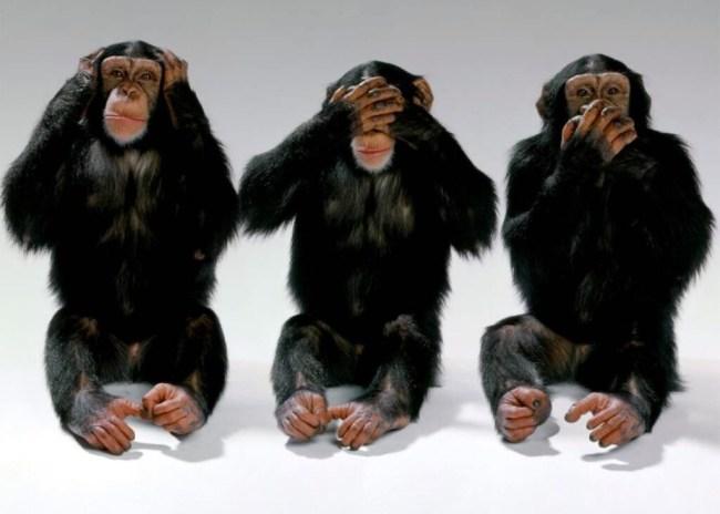 Πλακώσανε οι «μαϊμούδες»…