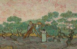 Εκδήλωση – συζήτηση για την καλλιέργεια της ελιάς