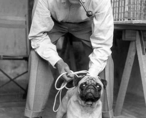 Duke of Windsor with two tone Penny Loafers