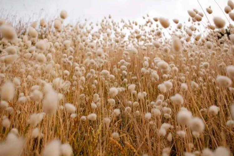 mizu bamboo cotton